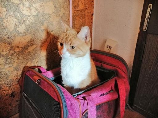 Katze Queenie